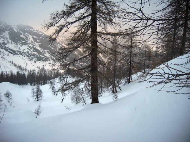 Il magnifico bosco sopra le Alpi della Moja