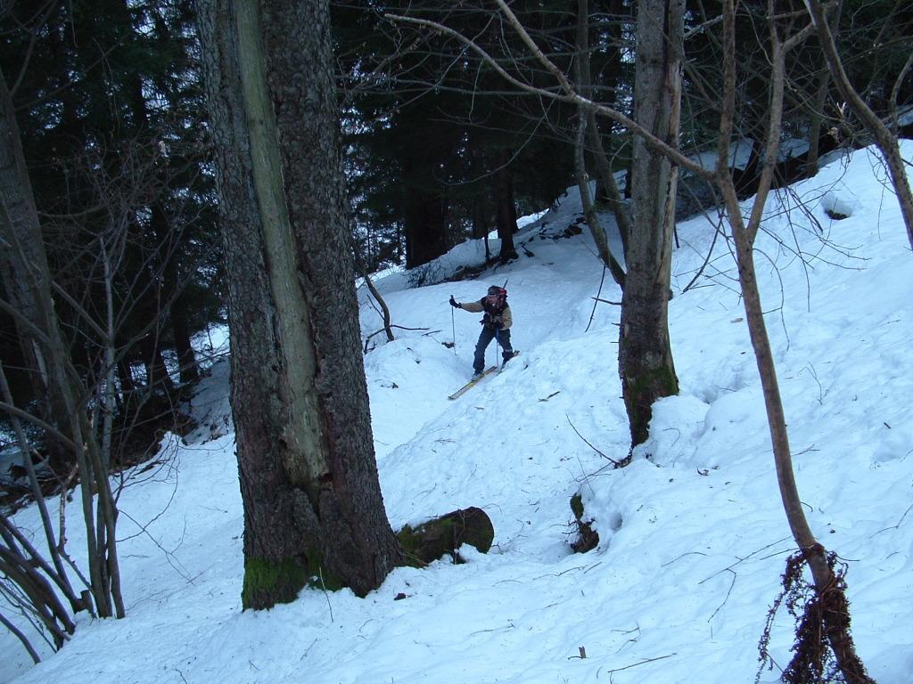 Nel bosco subito sopra il ponte delle Guardie