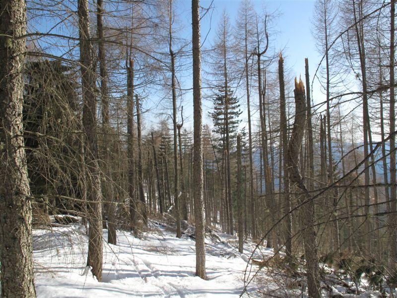 La strage di alberi