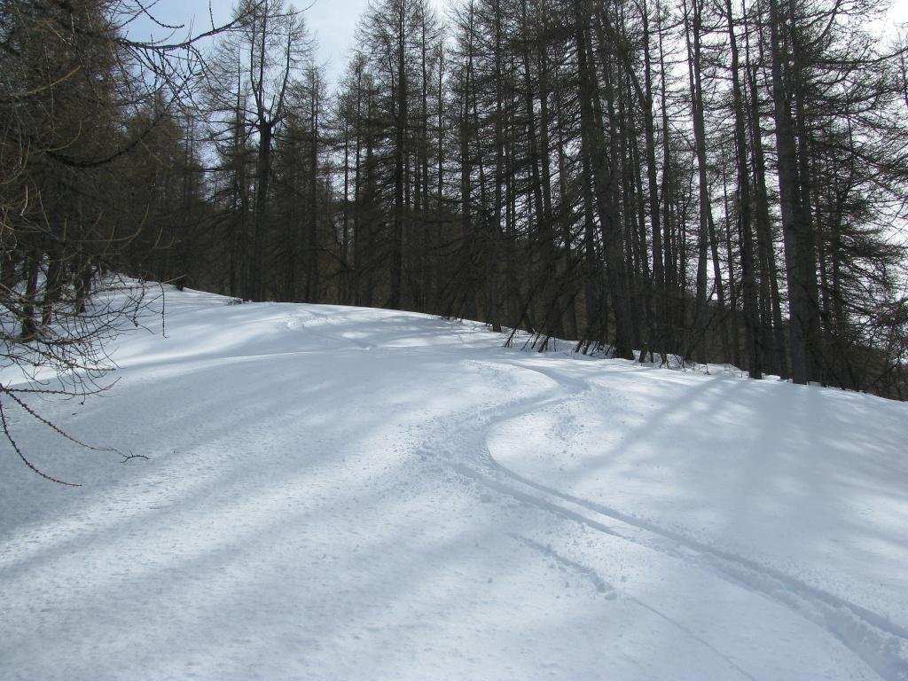 Curve nel bosco