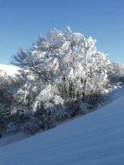 neve abbondante sulla faggeta di Val di Canatra - foto di Silvia