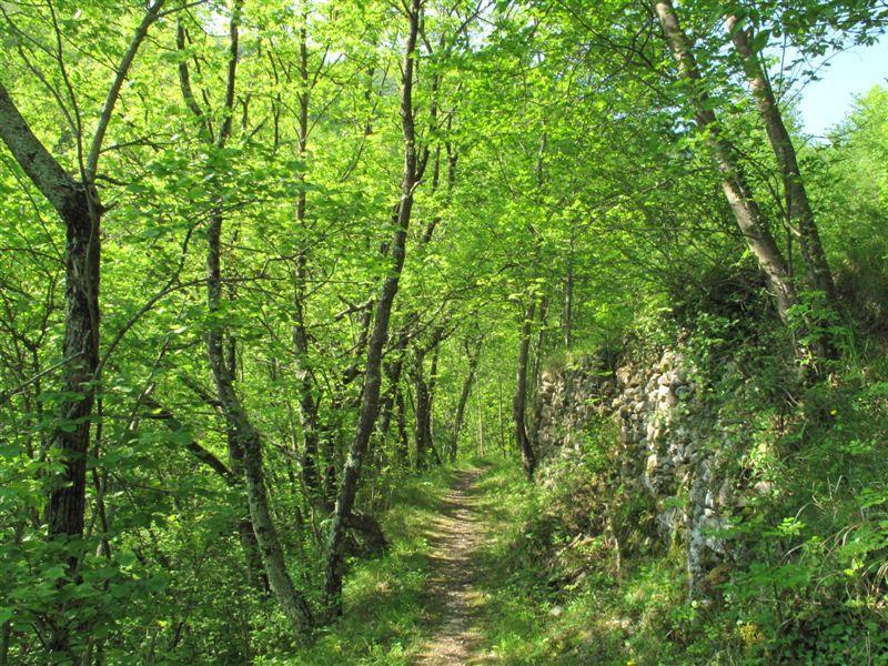 Sul sentiero dopo Borgo
