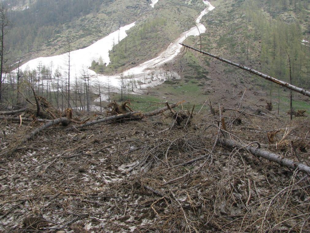 Le devastazioni delle valanghe al Pian Azaria