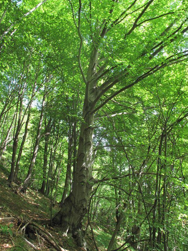 Nel bel bosco