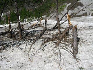 quanta legna da tagliare....