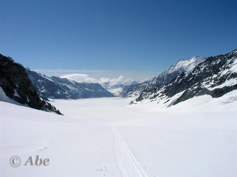 Jungfraufirn