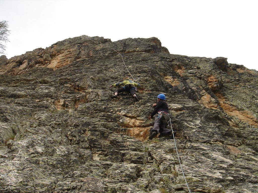Sanglier (Tete du) Fleurs de rocaille 2009-05-31