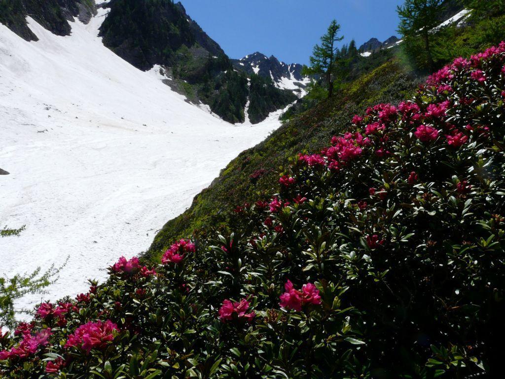 neve e... fiori ,bellissimo contrasto