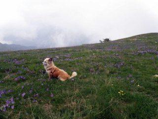 flora e .. fauna
