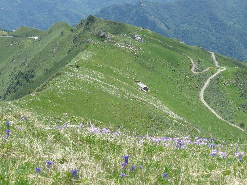 Verso Alpe Zanai.