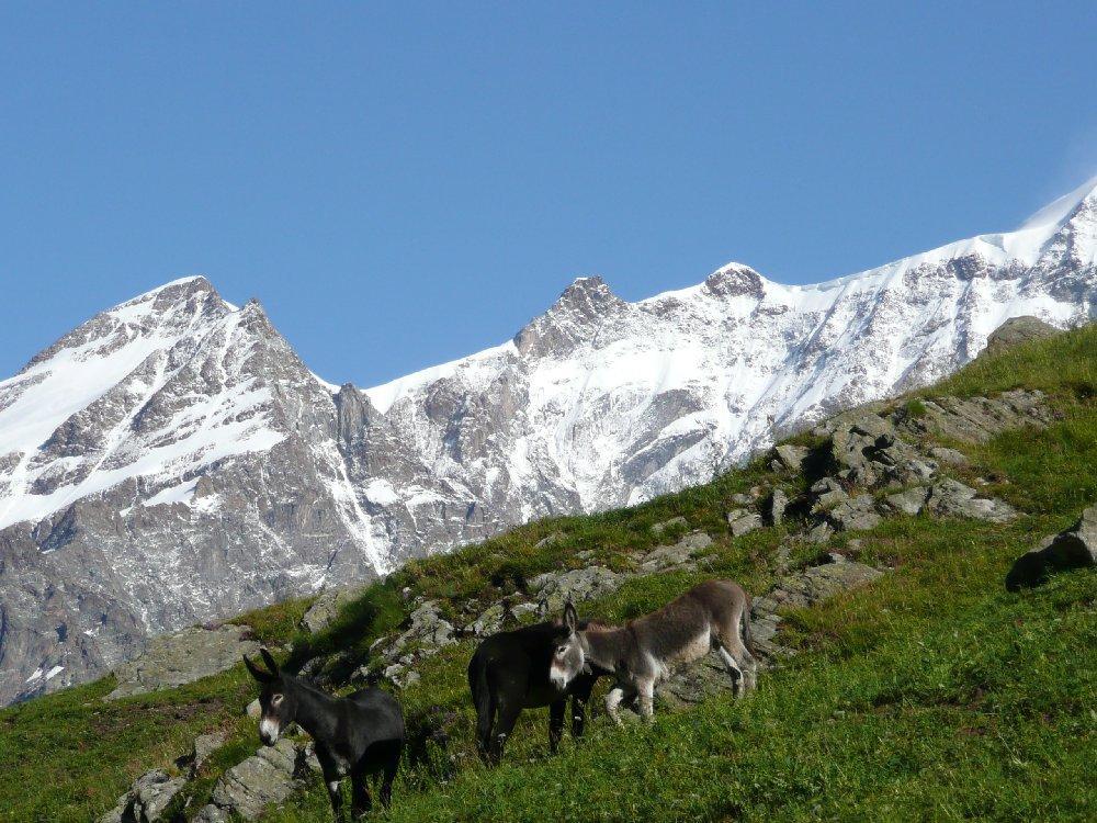 Presso Alpe Campo