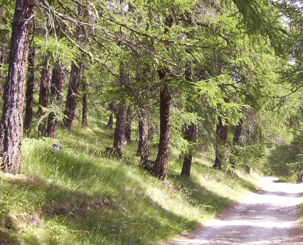 sentiero nel bosco 11c