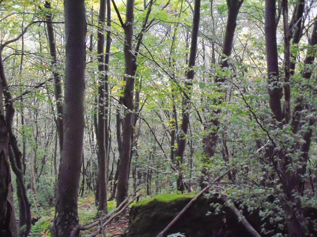 il bosco di salita