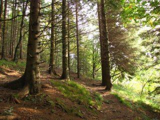 Il bosco, salendo