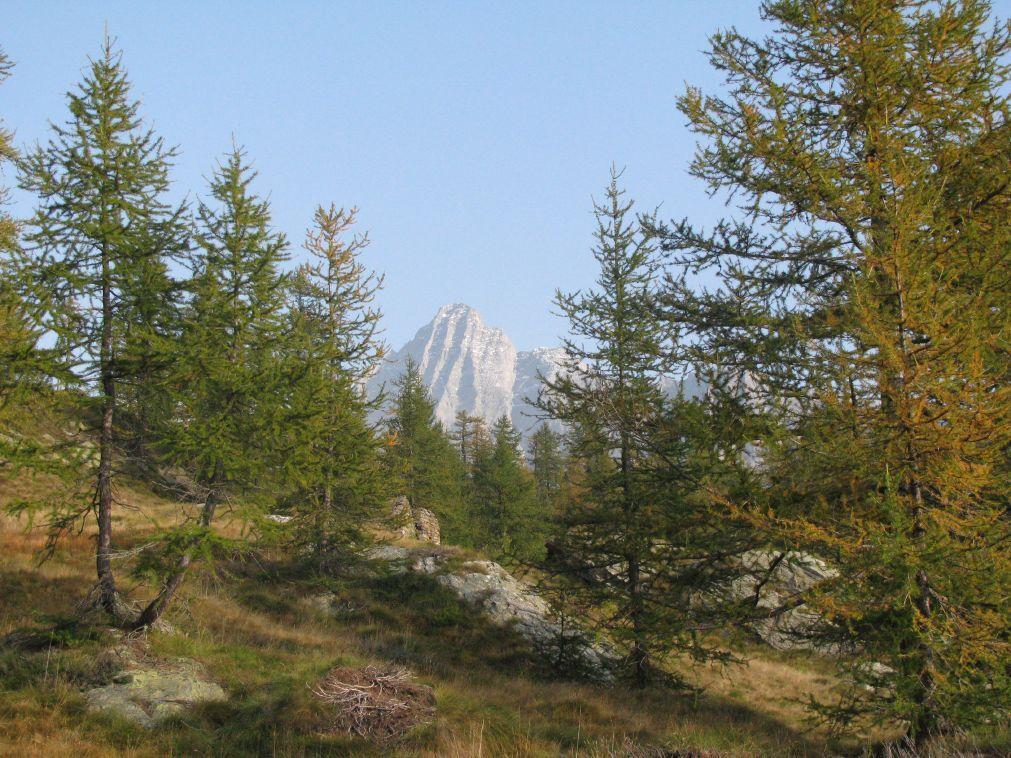 Il bosco e la Torre Lavina