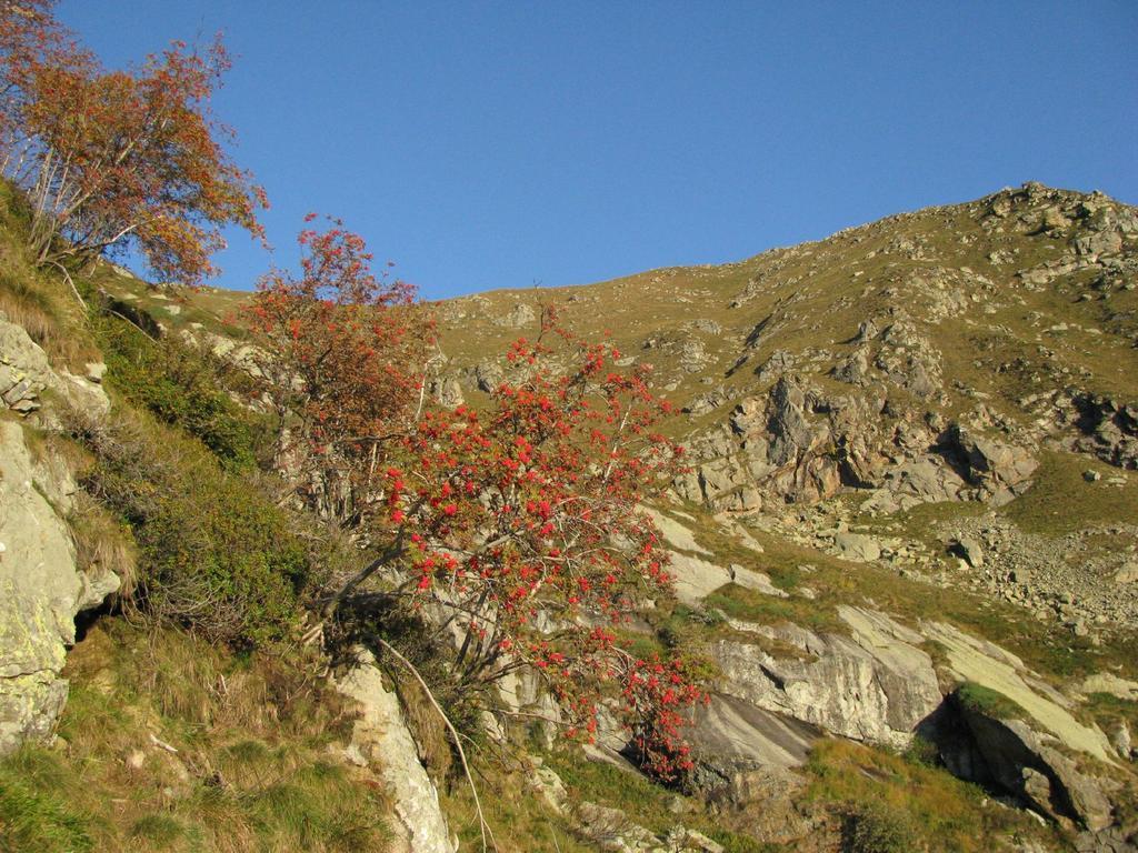 Sorbo degli Uccellatori e cresta sommitale del M. Rosso