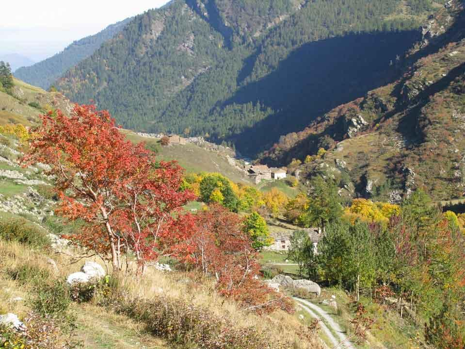 I bei  colori dell'autunno...