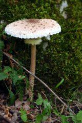 Mazza di tamburo nel bosco