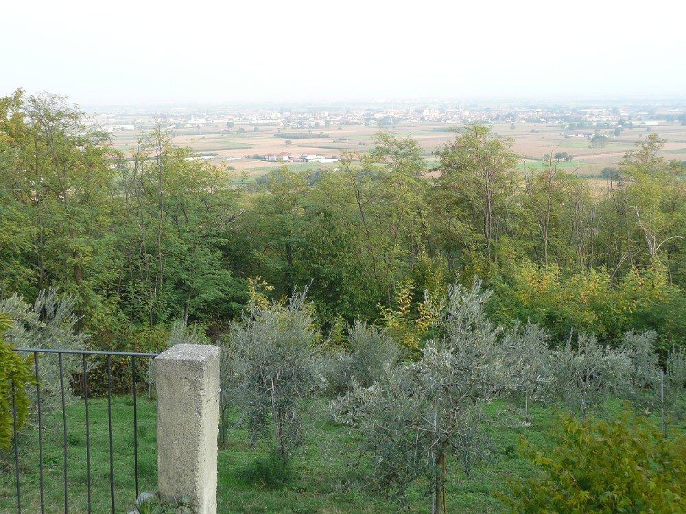 Uliveto in collina per Miralta