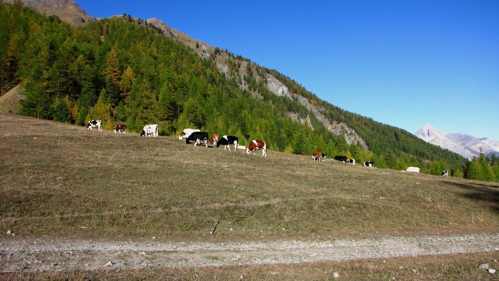 pascoli nei pressi delle Grange Thures Superiori (11-10-2009)