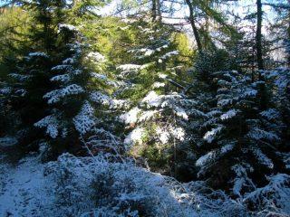 Nella parte bassa del bosco