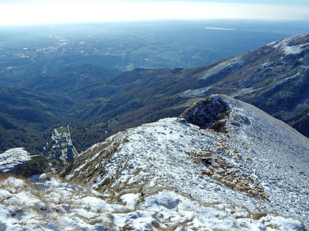 Santuario , lago di Viverone e gregge.
