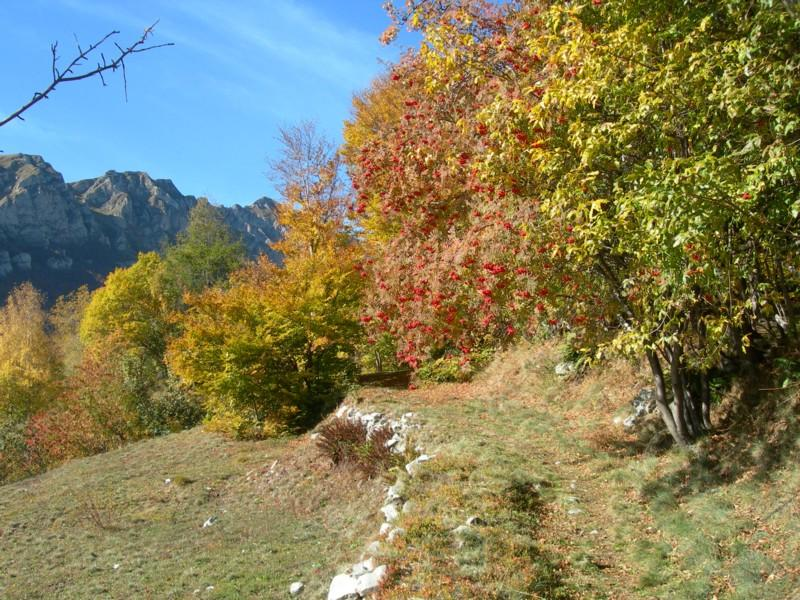 Bei colori all'inizio del bosco