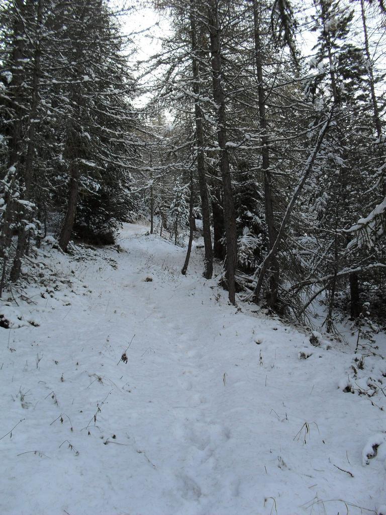Nel bosco fitto ancora inviolato