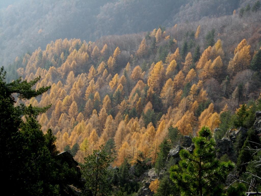 Colori autunnali percorrendo il sentiero forestale