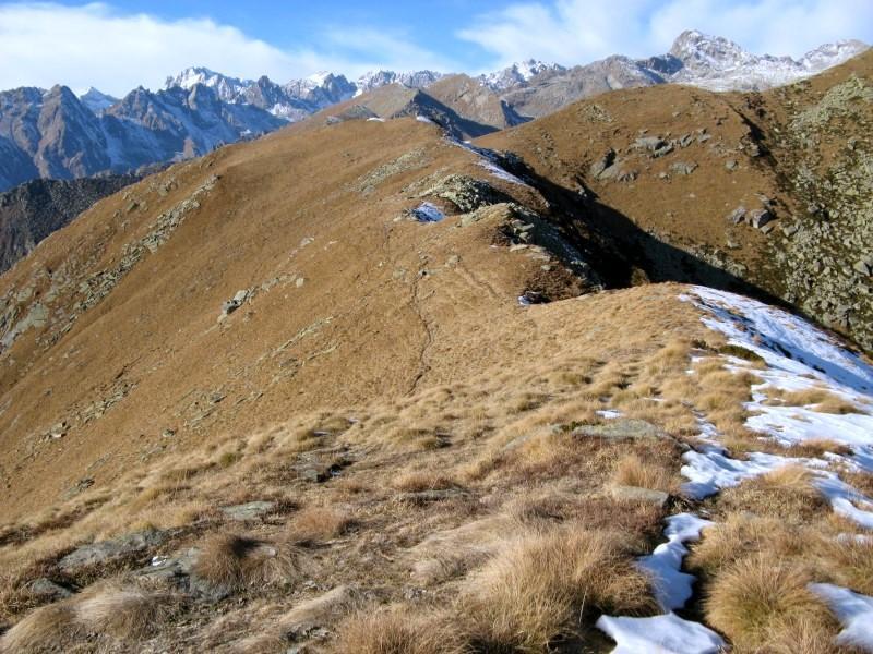 Dal Monte Arzola