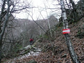 Verso Alpe Pian dei Fort
