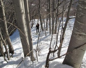 Salita nel bosco