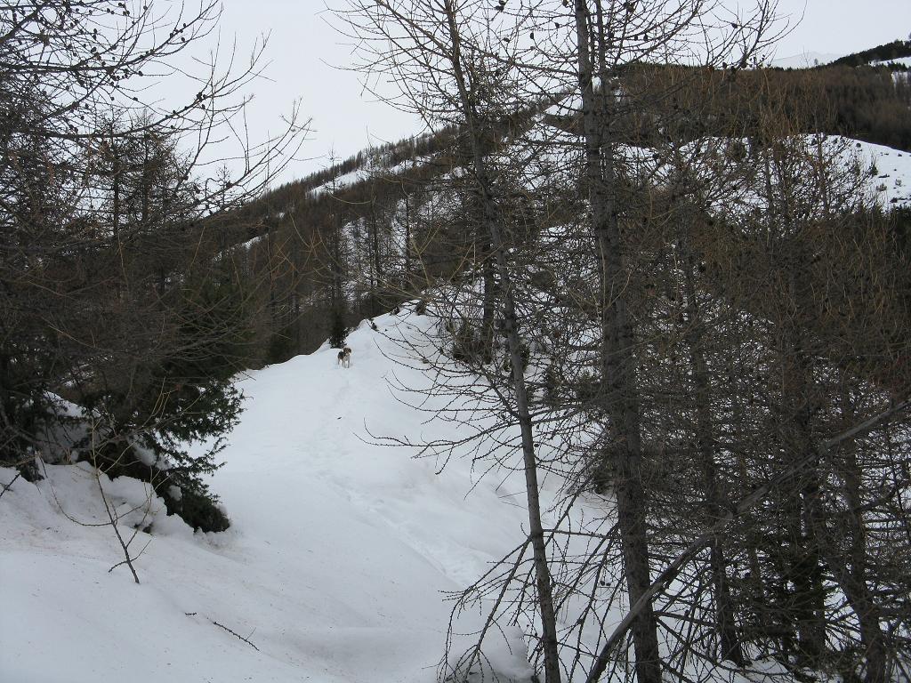 In mezzo al bosco lungo la dorsale di salita