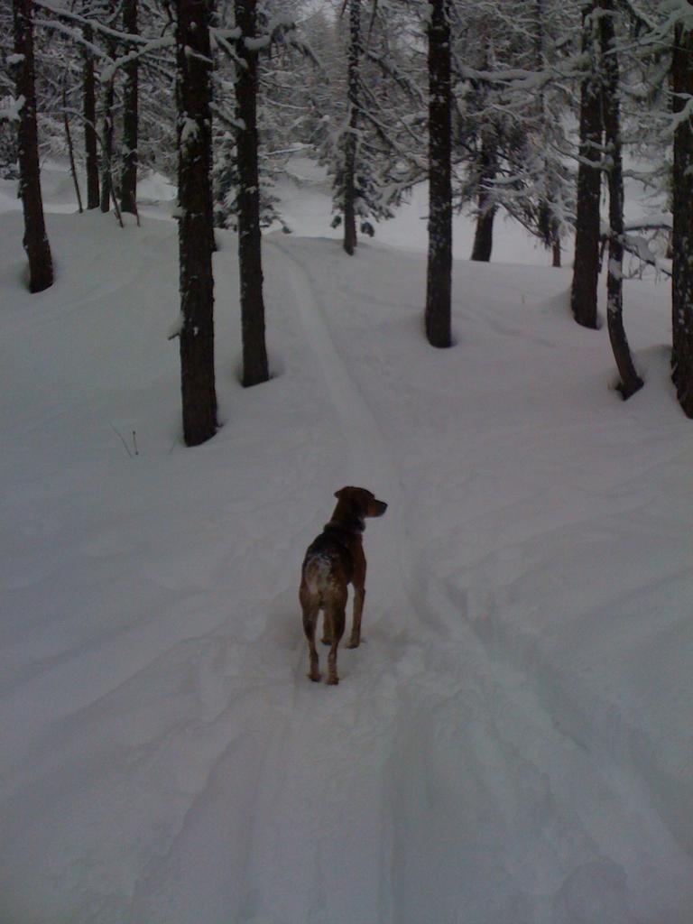 Ax cane geneticamente modificato per lo scialpinismo