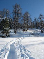 ambiente invernale...