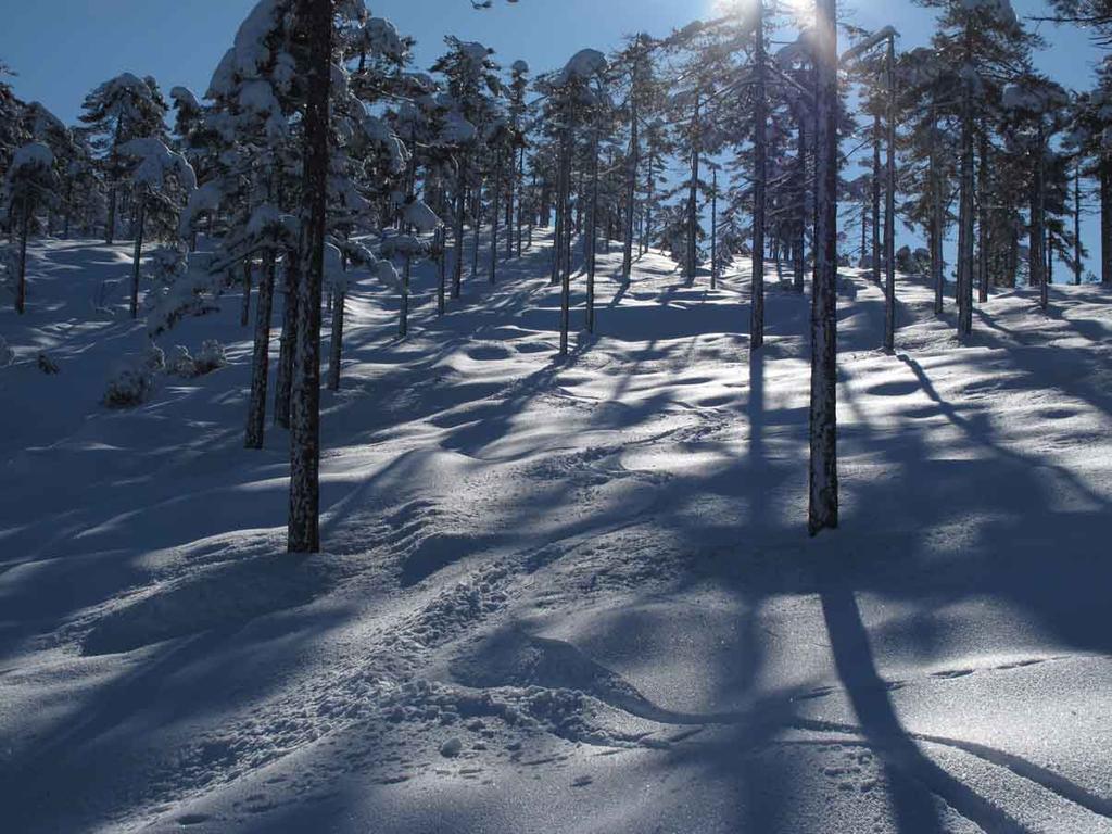 discesa nel bosco a nord