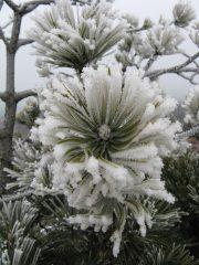 Fiore di ghiaccio