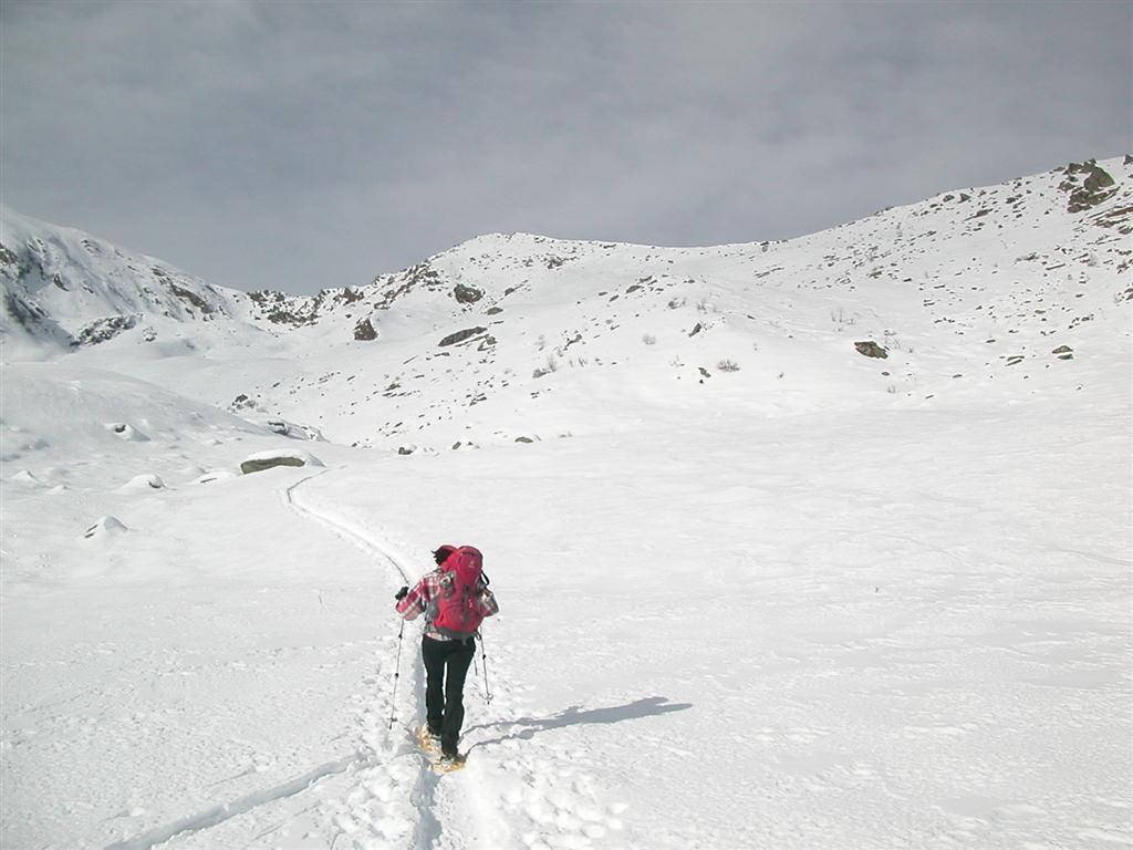 Quasi all' Alpe di Grifone