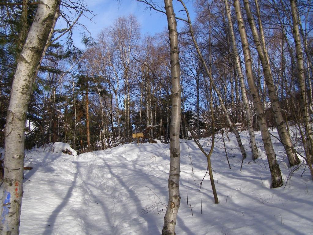 Innevamento del sentiero nel bosco