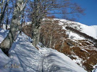 Salendo poco dopo l'Alpe Loccia