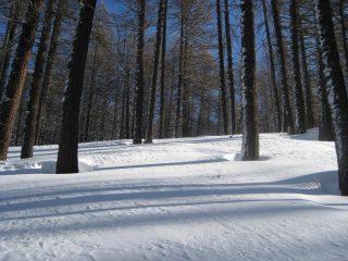 il magnifico bosco