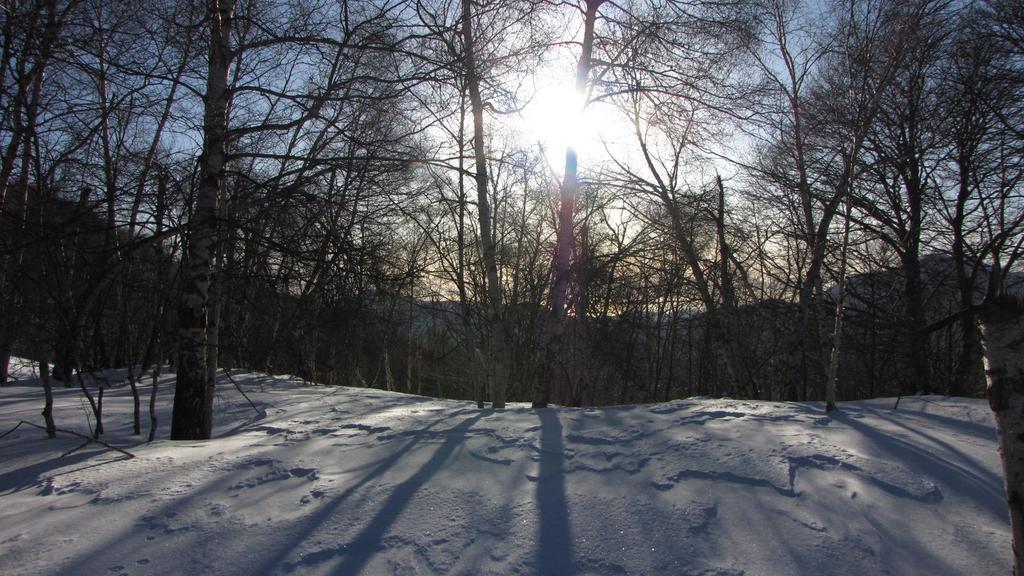 il sole cerca di filtrare tra il fitto bosco (21-2-2010)