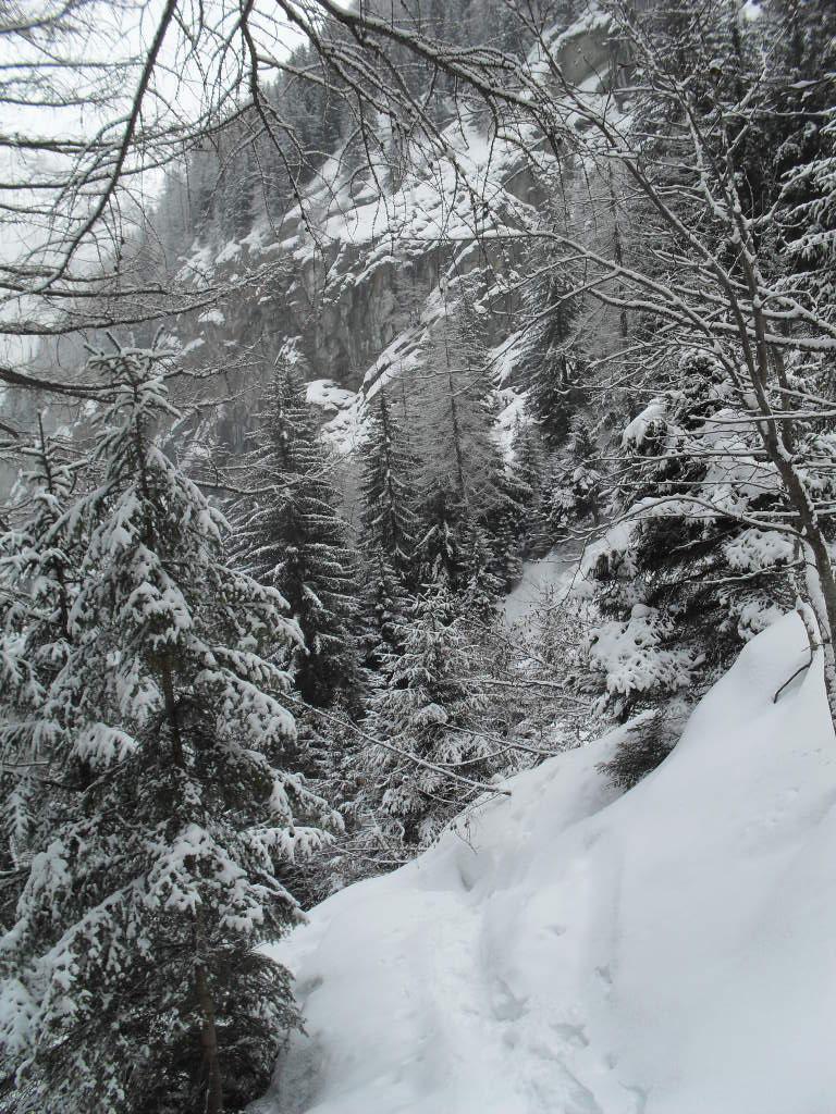 nel bosco,coi pendii carichi