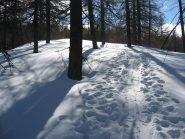 ombre e luci nel bosco