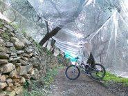 tunnel sotto le reti per le olive....