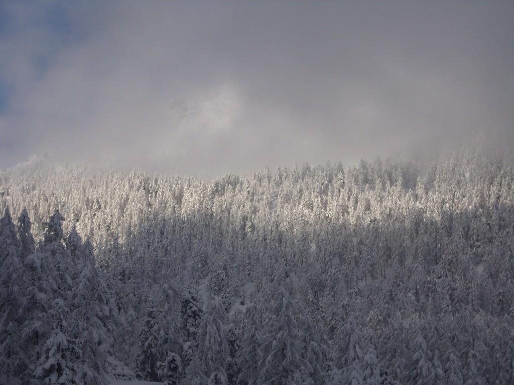 02 - luci ed ombre sul bosco innevato