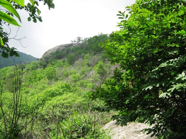 Il bosco in cui sorge la falesia