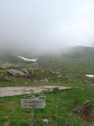 solita nebbia al selleries