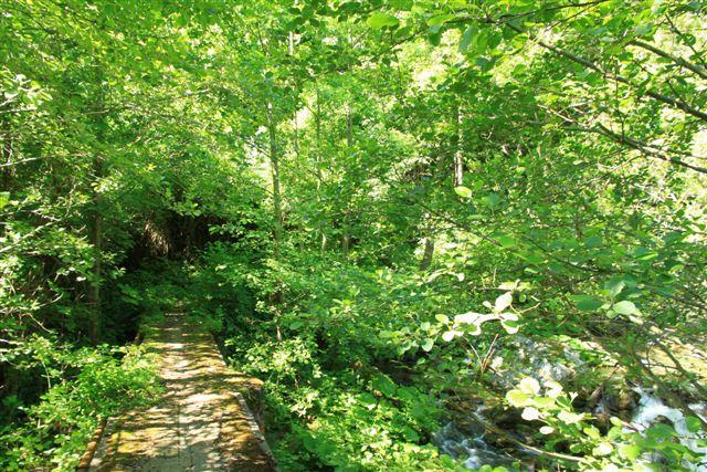 Nel bosco si attraversa il fiume