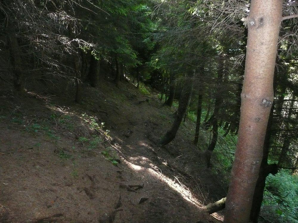 Mi inoltrai in una selva oscura, sentiero 5 dai piani d'Erna